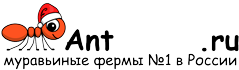 Муравьиные фермы AntFarms.ru - Таганрог